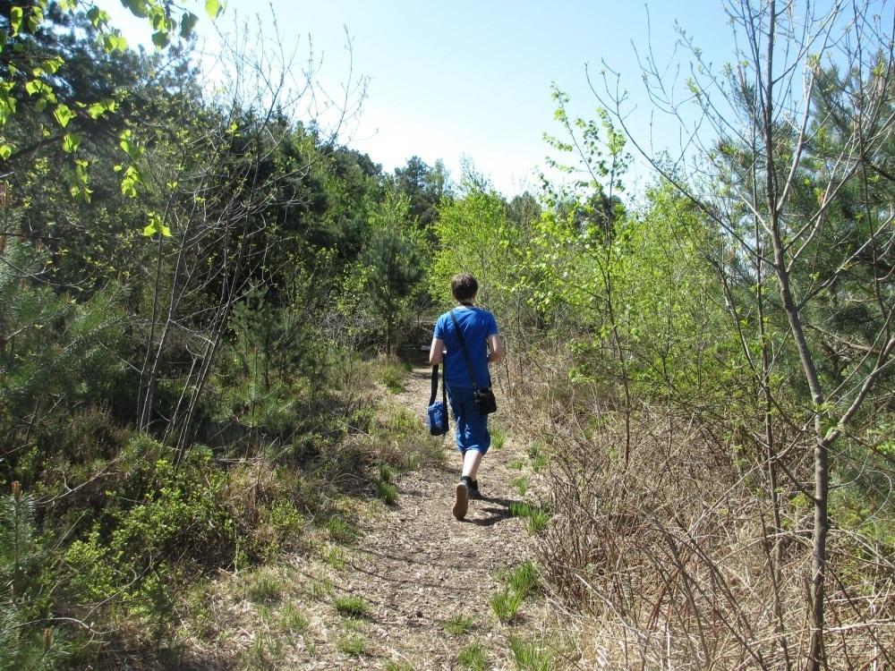 Landschaft am Moorsee - Sterntaler Filze