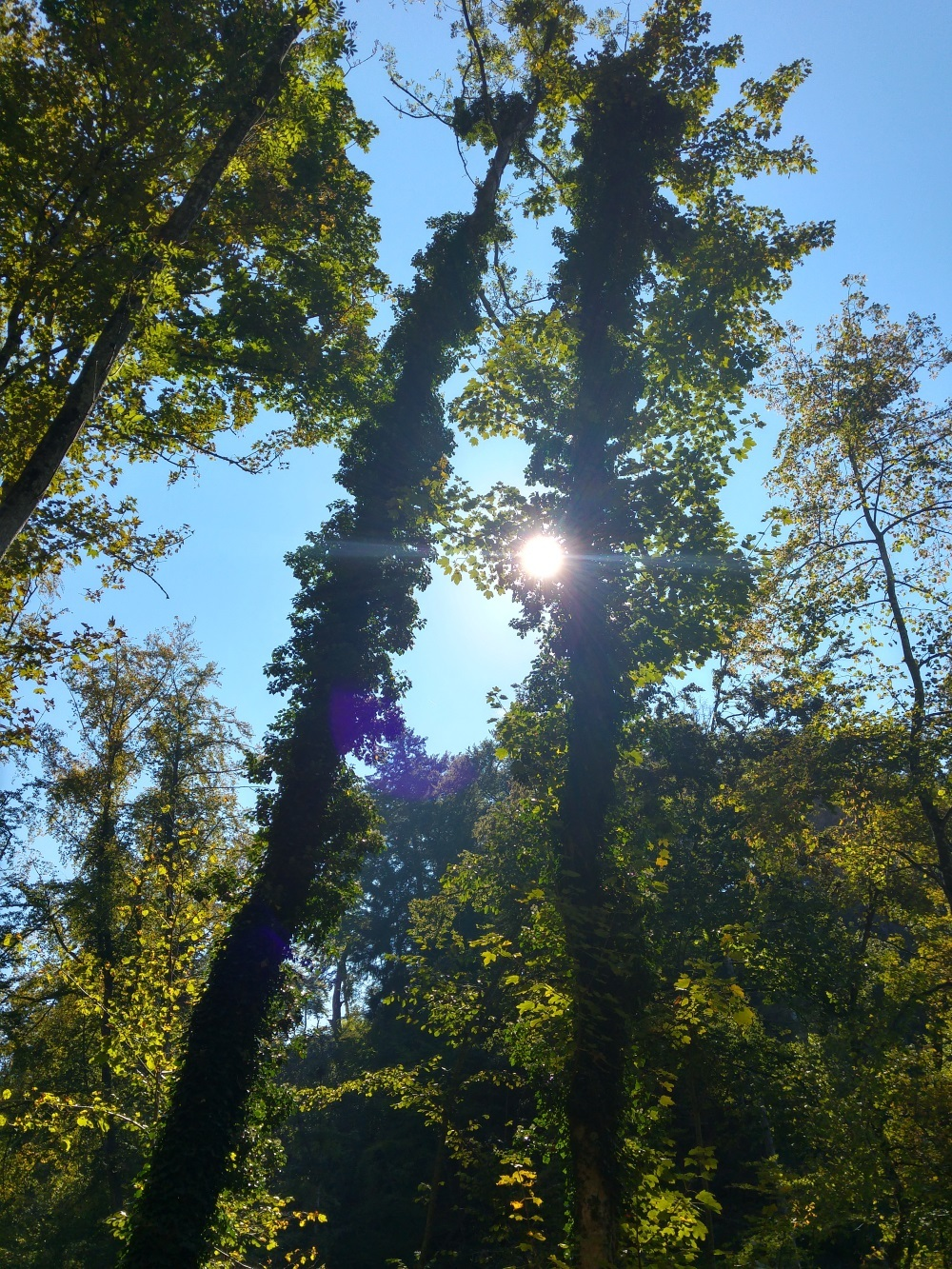 Die Bäume sind hoch, die Herbstsonne spitzt noch mühsam durch
