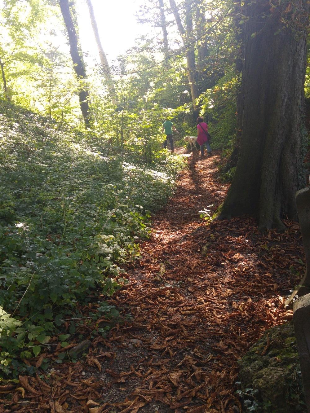 Pähler Schlucht, der Weg führt um das Pähler Hochschloß herum durch den Wald