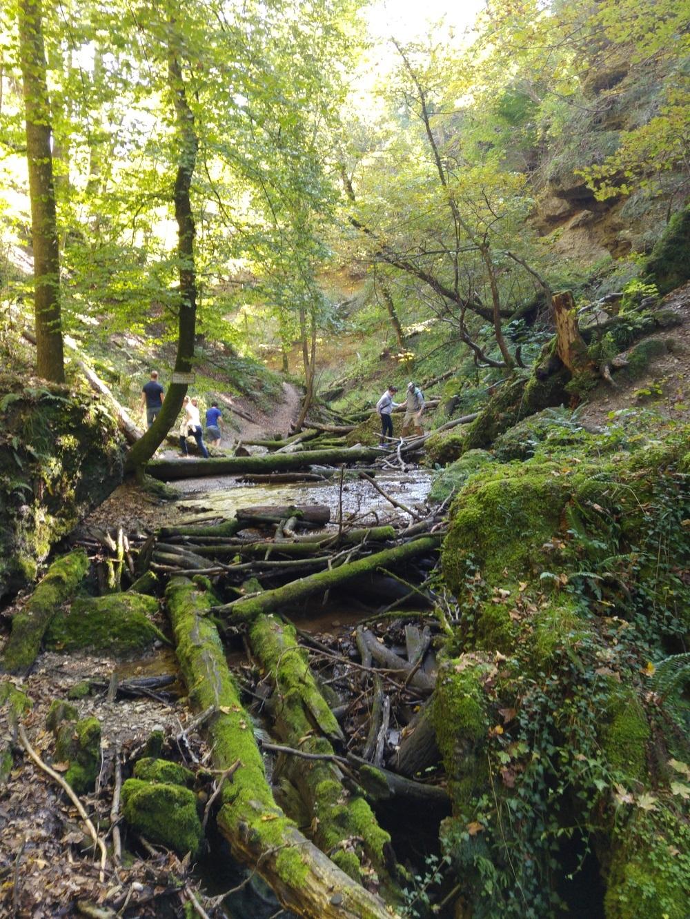 Über herumliegende Steine und Bäume balancieren wir mal wieder auf die andere Seite des Baches