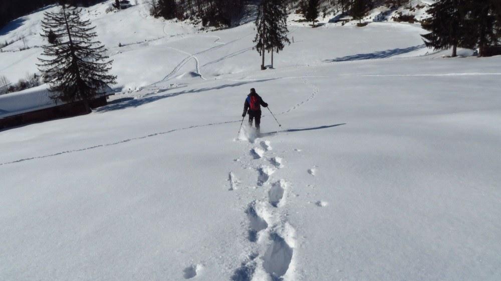 Hüpf, da stäubt der Schnee... Glück gehabt, nicht in den Schnee gekugelt, beim Abwärtslaufen.