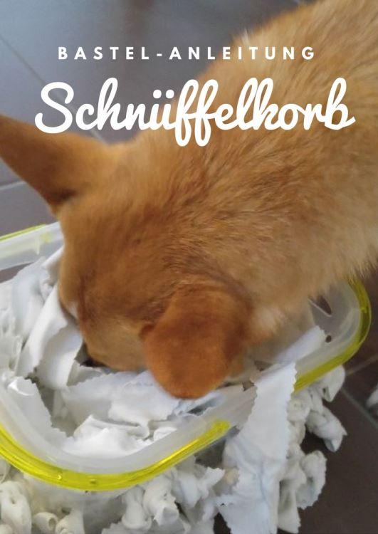 Nasenarbeit fuer den hund schnueffelkorb