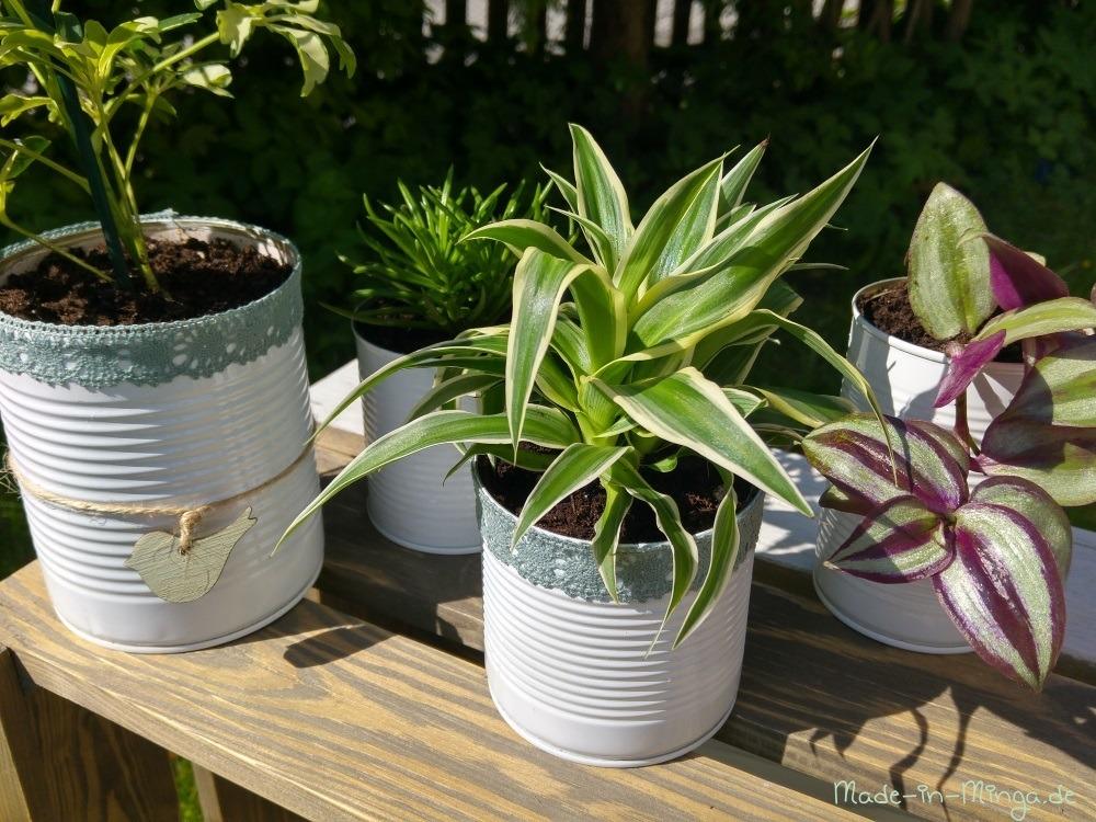 Dosen sind fertig dekoriert und bepflanzt