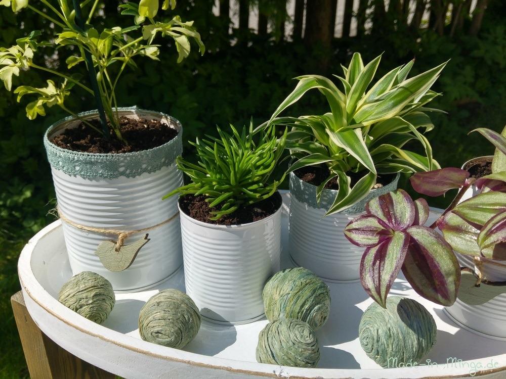 blumen in konservendose pflanzen. Black Bedroom Furniture Sets. Home Design Ideas