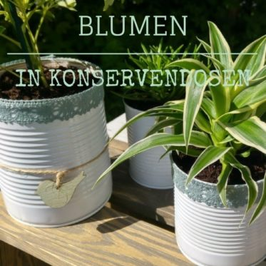 Blume in Konservendose pflanzen made-in-minga