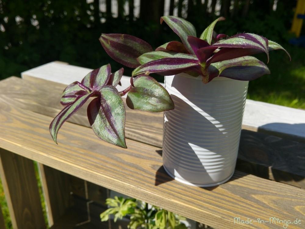 Kleine Hängepflanze in die hohe Dose