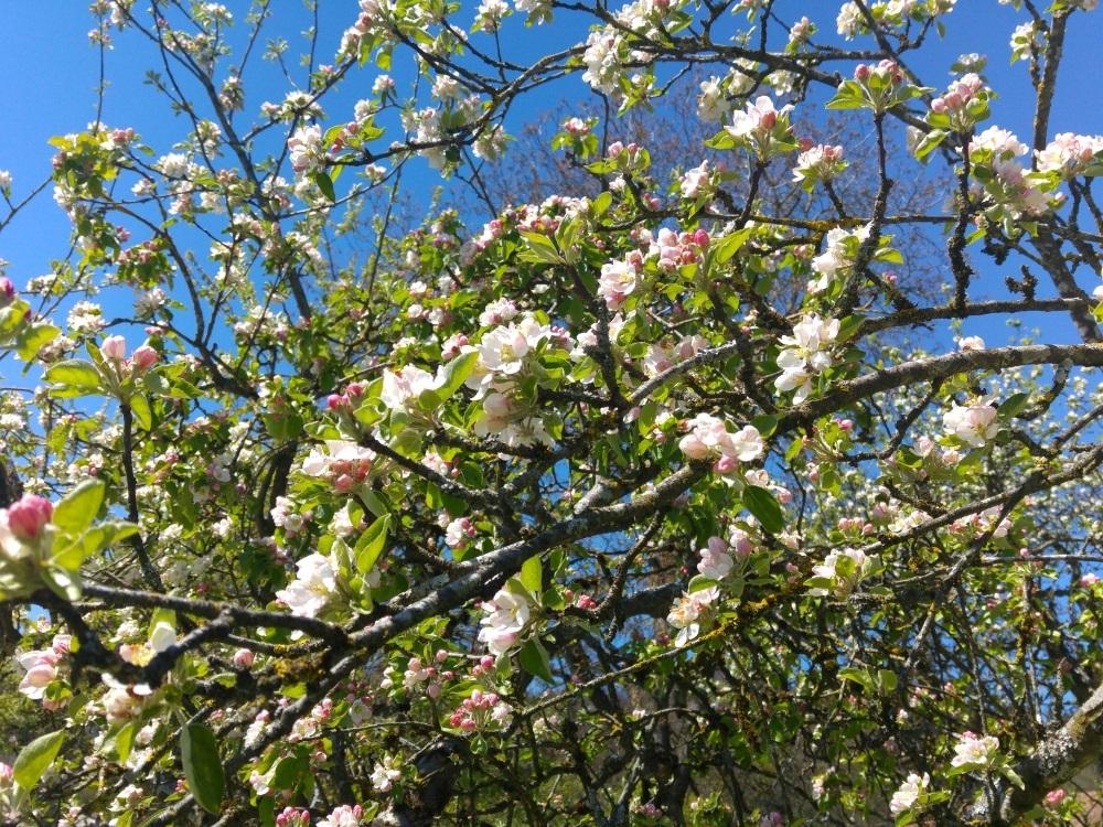 Blüten überall am Weg zum Aussichtsturm Ratzinger Höhe