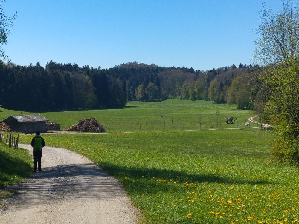 Aus dem Dorf Rimsting heraus zieht sich der Wanderweg idyllisch über Wiesen