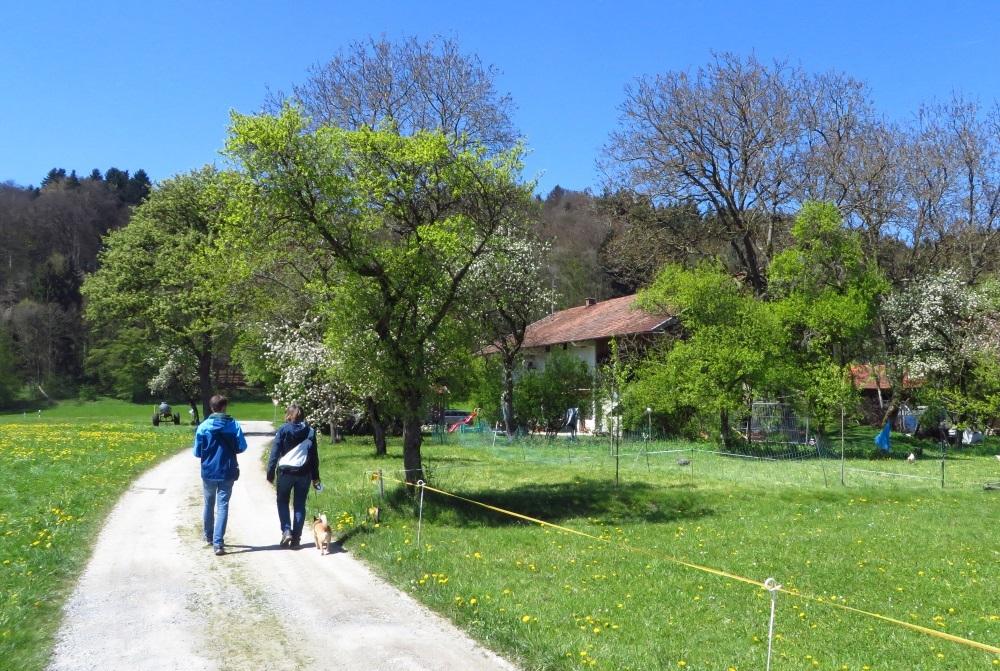 Abwechslung beim Wandern - vorbei an Hühnern und Streuobstwiesen zu Ratzinger Höhe