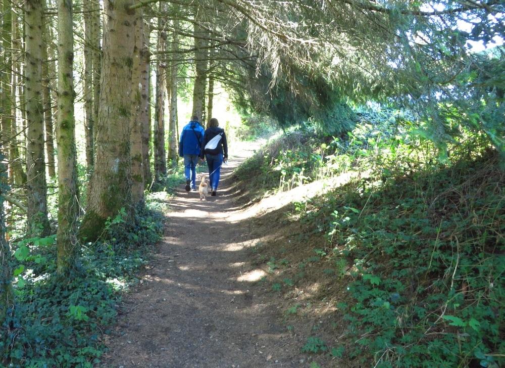 Waldwege führen zur Ratzinger Höhe