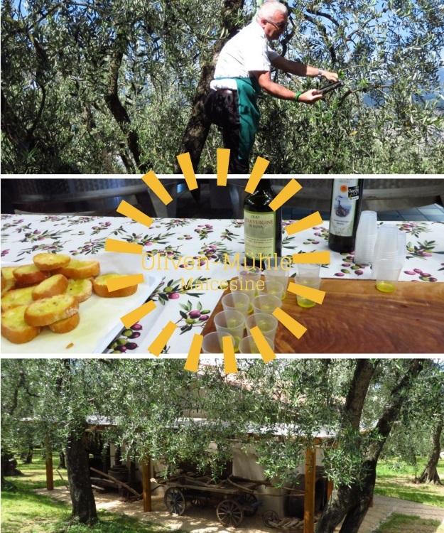 Interessantes über den Anbau von Oliven lernen in Malcesine