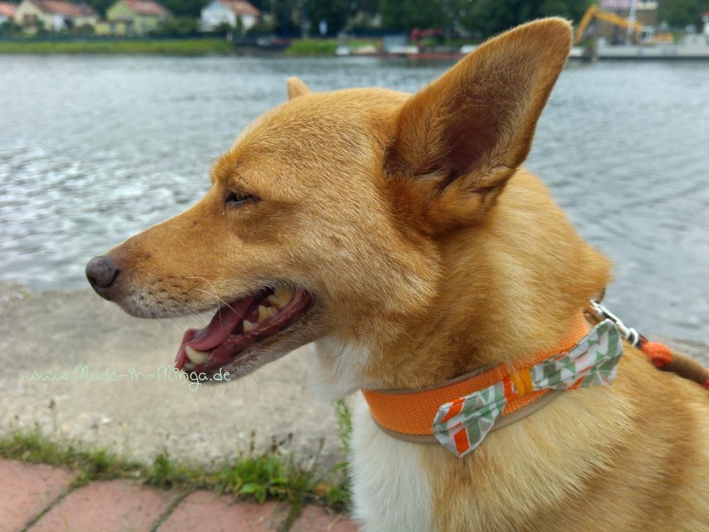 Halsband mit Schleife und Hundi