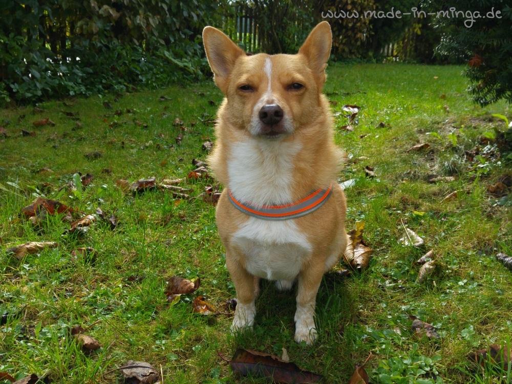Zufriedener Hund mit neuem selbstgenähten Hundegeschirr