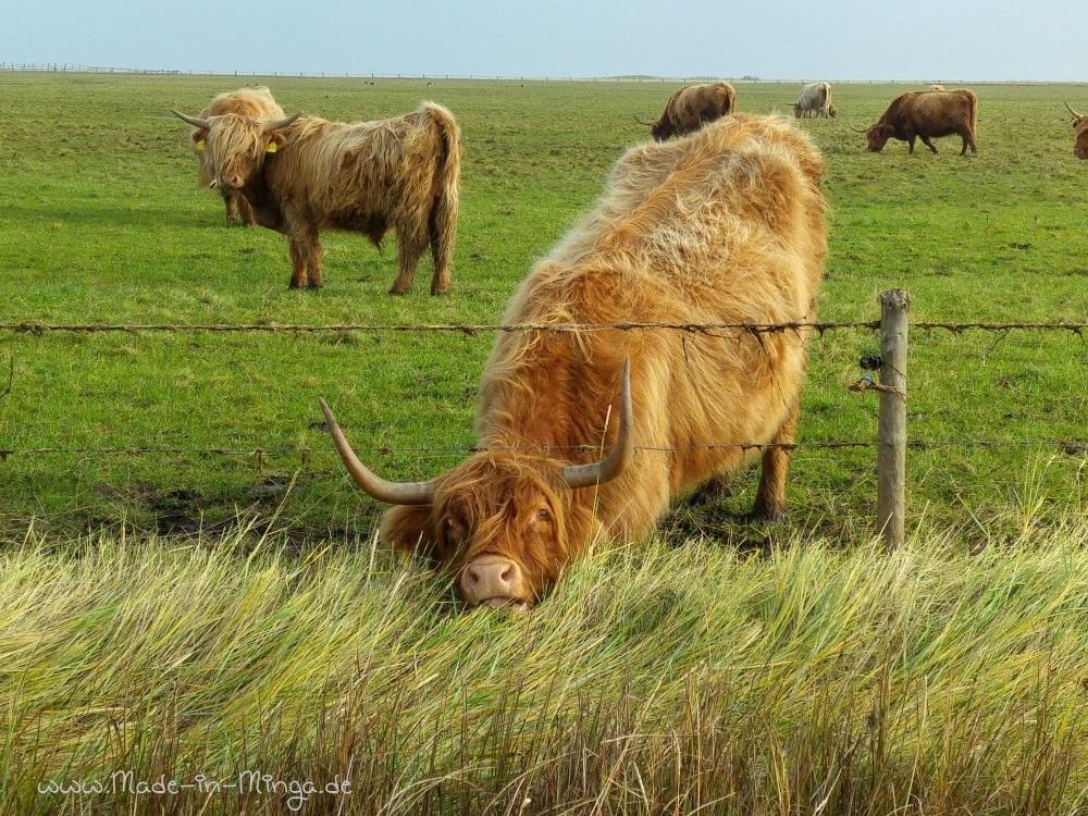 die schottischen Highlands sind robust genug für das Wetter der Hallig