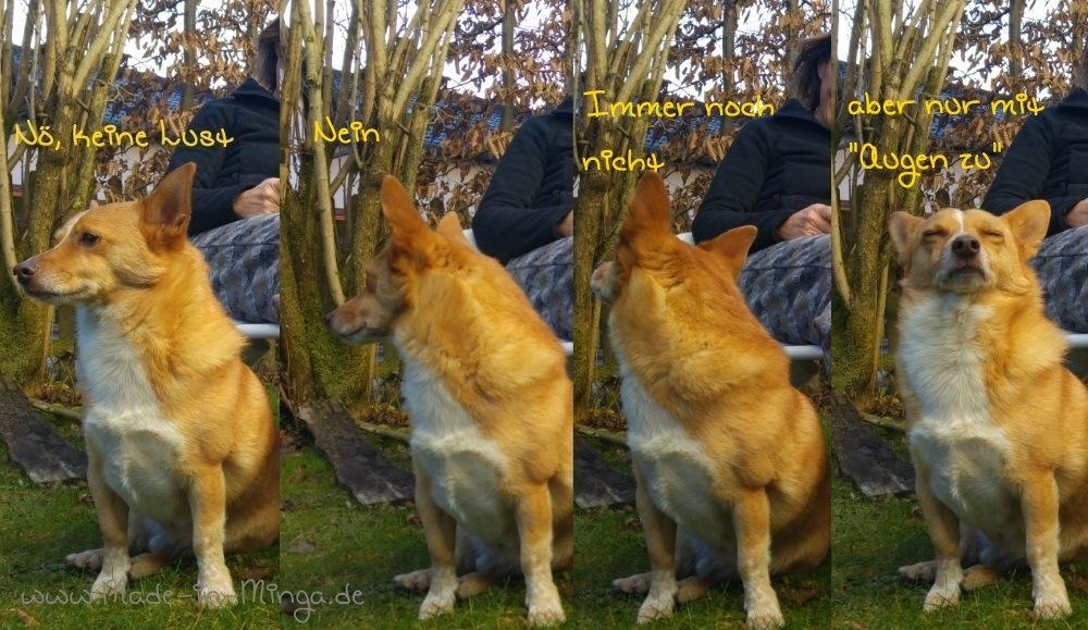 Hundefotos sind schwierig ohne Leckerli
