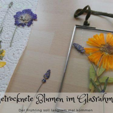 getrocknete und gepresste Blumen im Glasrahmen