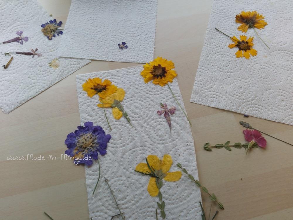 viele gepresste Blumen