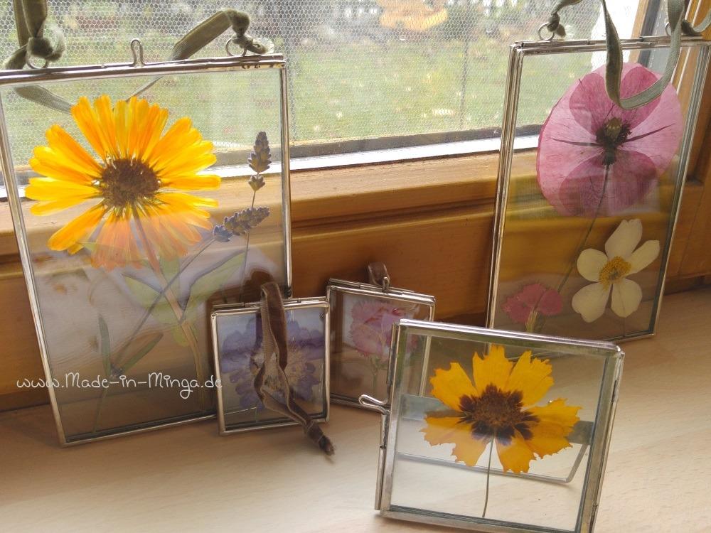 gepresste Blumen im Glasrahmen arrangieren