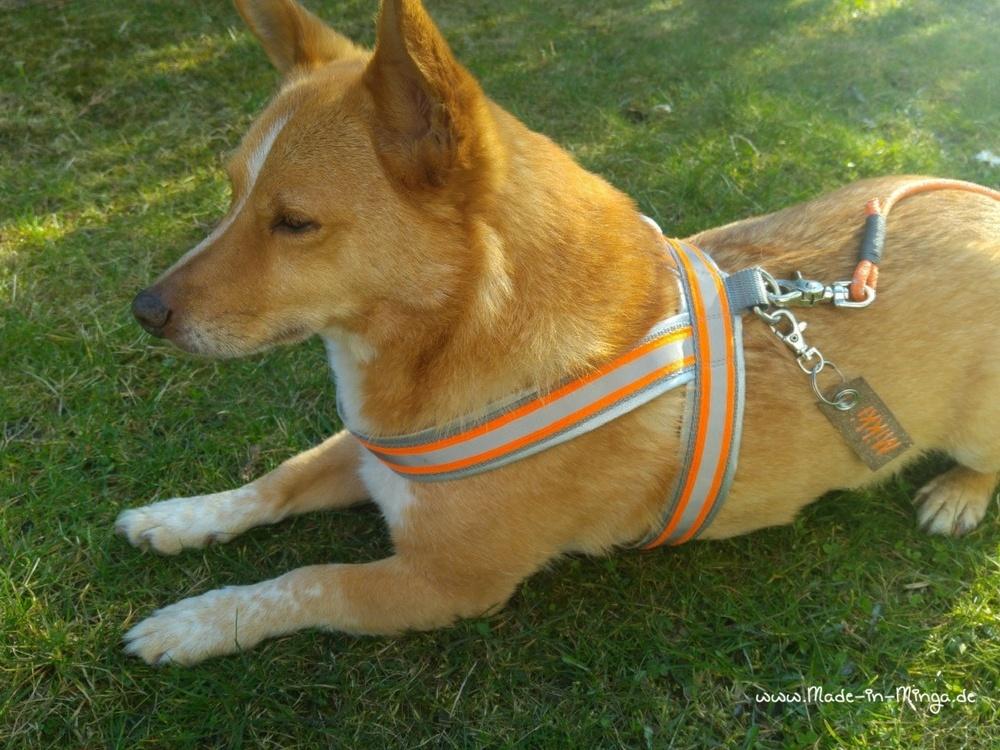 selbstgenähtes HundeGeschirr mit Leine und Namensschild