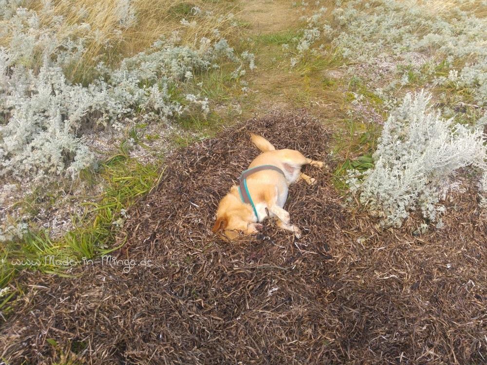 Hund im trockenen Seegras