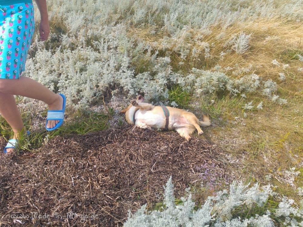 Hund freut sich über das Seegras