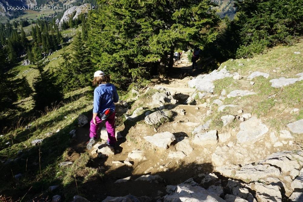 Waldweg mit Steinen zurück zum Taubensteinhaus