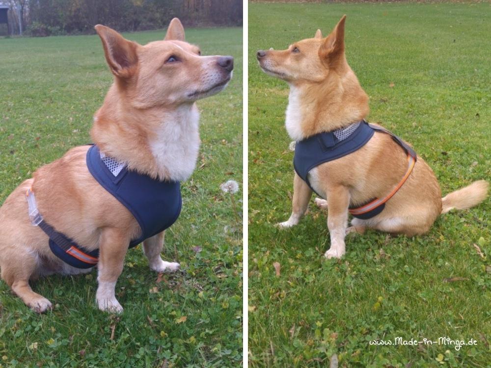 Hundegeschirr nähen mit Gurtband und Steckverschluß