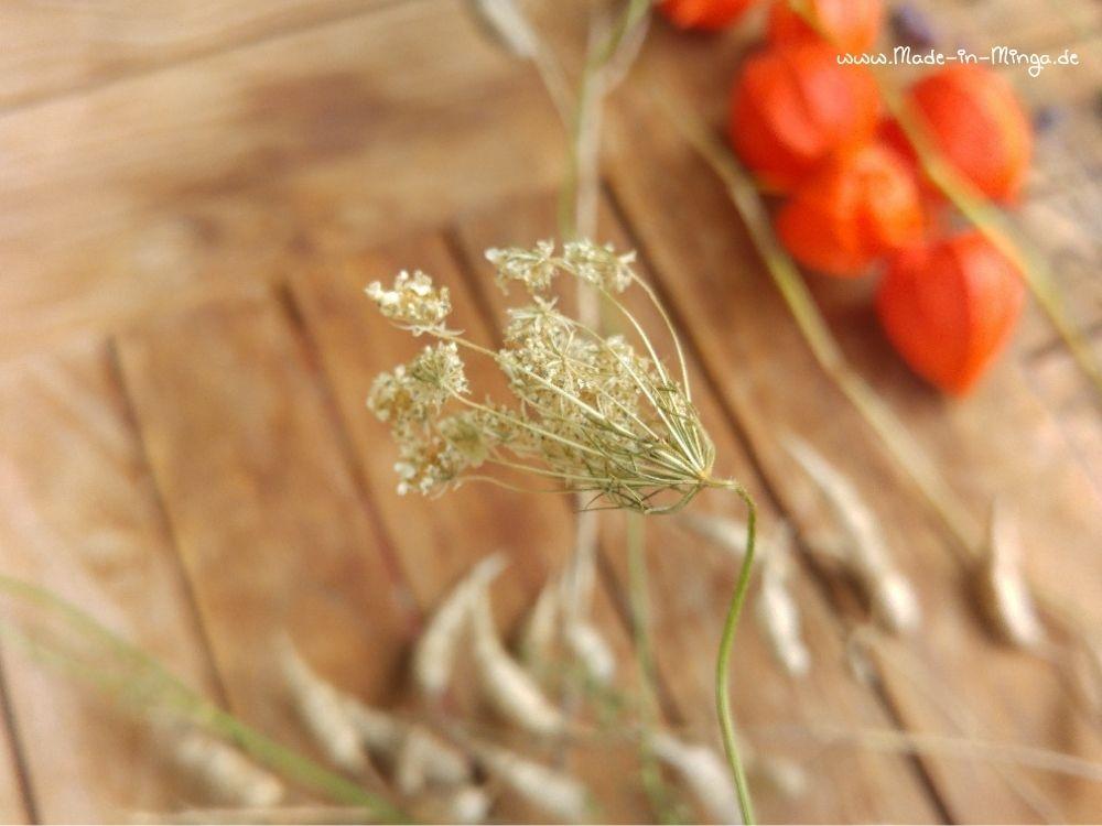 getrocknete Wilde Möhre kommt in den Herbstkranz